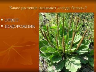 Какое растение называют «следы белых»? ОТВЕТ: ПОДОРОЖНИК
