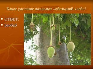 Какое растение называют «обезьяний хлеб»? ОТВЕТ: Баобаб
