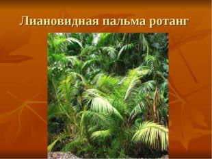 Лиановидная пальма ротанг