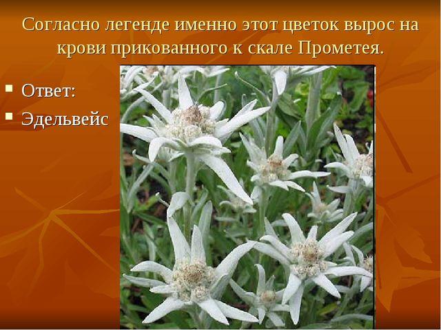 Согласно легенде именно этот цветок вырос на крови прикованного к скале Проме...