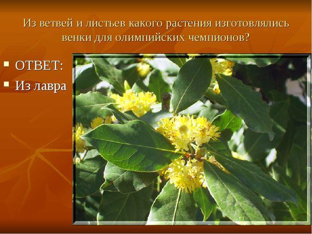 Из ветвей и листьев какого растения изготовлялись венки для олимпийских чемпи...