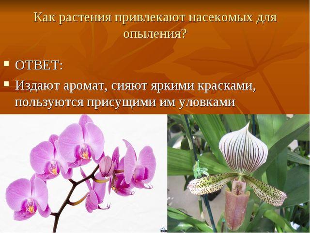 Как растения привлекают насекомых для опыления? ОТВЕТ: Издают аромат, сияют я...