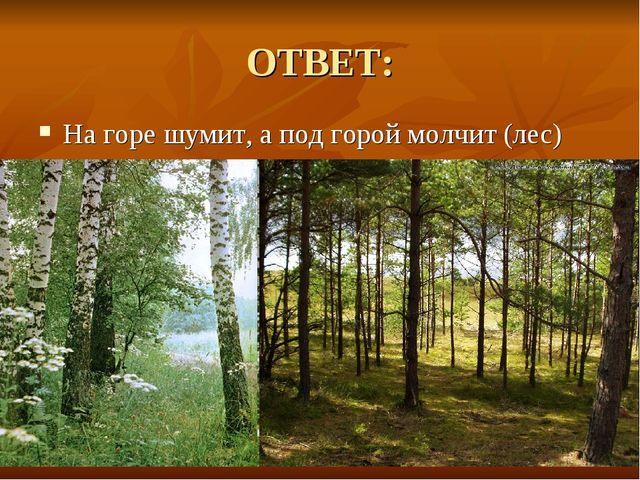 ОТВЕТ: На горе шумит, а под горой молчит (лес)
