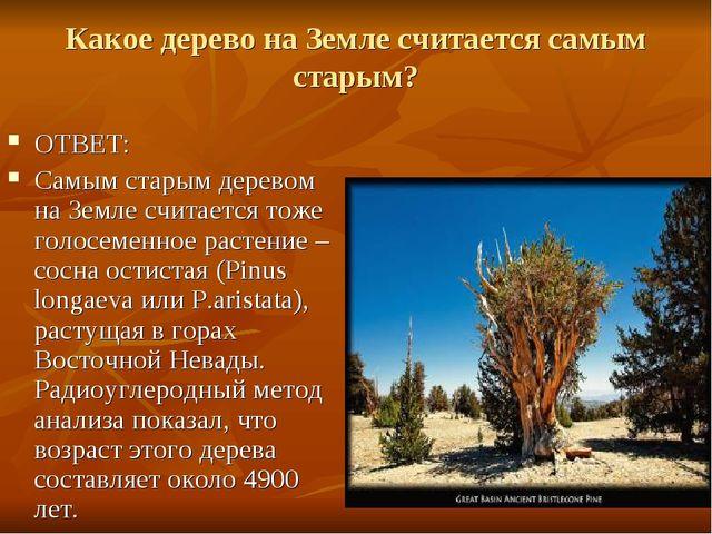 Какое дерево на Земле считается самым старым? ОТВЕТ: Самым старым деревом на...