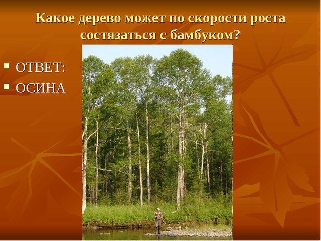 Какое дерево может по скорости роста состязаться с бамбуком? ОТВЕТ: ОСИНА