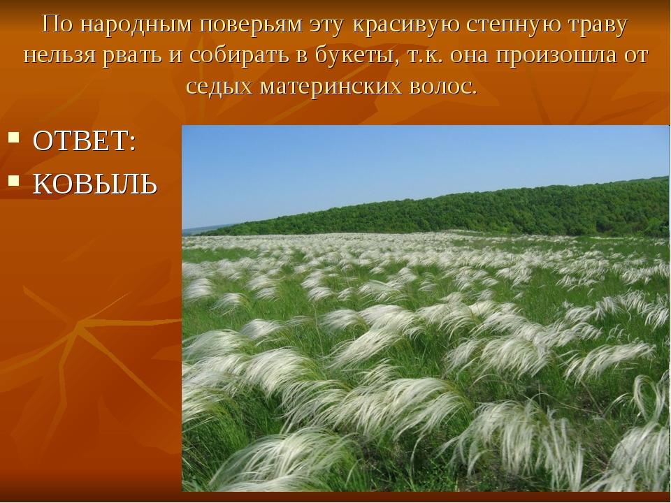 По народным поверьям эту красивую степную траву нельзя рвать и собирать в бук...