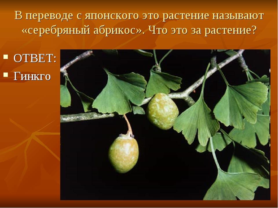 В переводе с японского это растение называют «серебряный абрикос». Что это за...