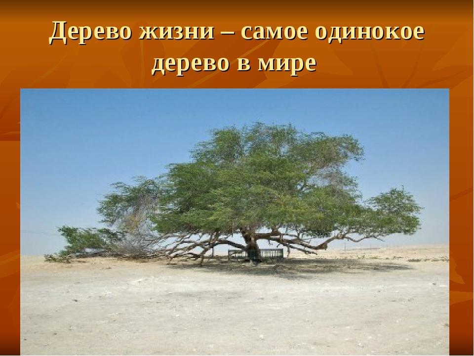 Дерево жизни – самое одинокое дерево в мире