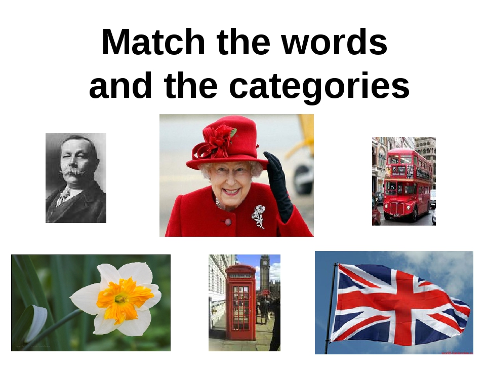 Match the words and the categories