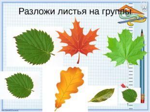 Разложи листья на группы По форме