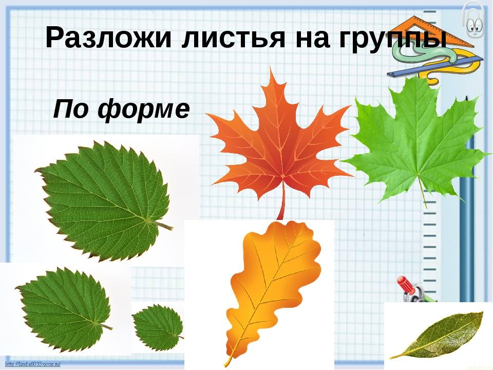 Разложи листья на группы По размеру