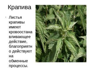 Крапива Листья крапивы имеют кровоостанавливающее действие, благоприятно дейс