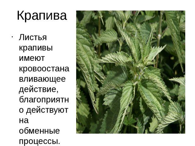 Крапива Листья крапивы имеют кровоостанавливающее действие, благоприятно дейс...