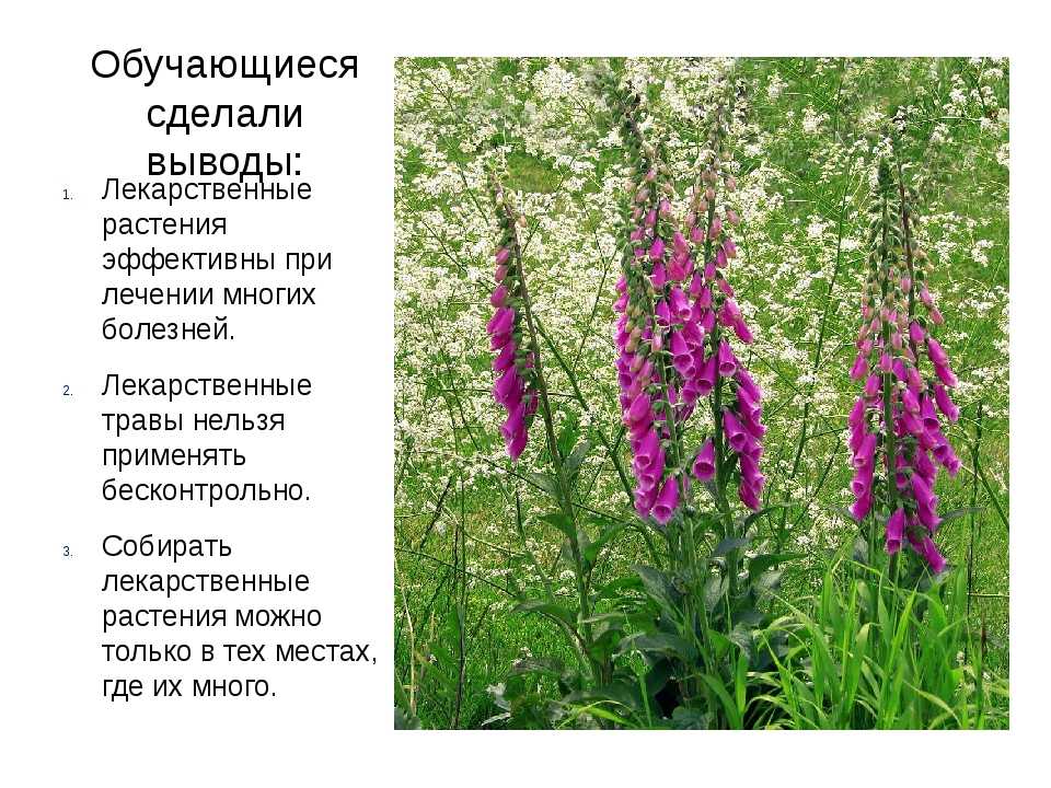 Обучающиеся сделали выводы: Лекарственные растения эффективны при лечении мно...