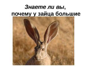 Знаете ли вы, почему у зайца большие уши?
