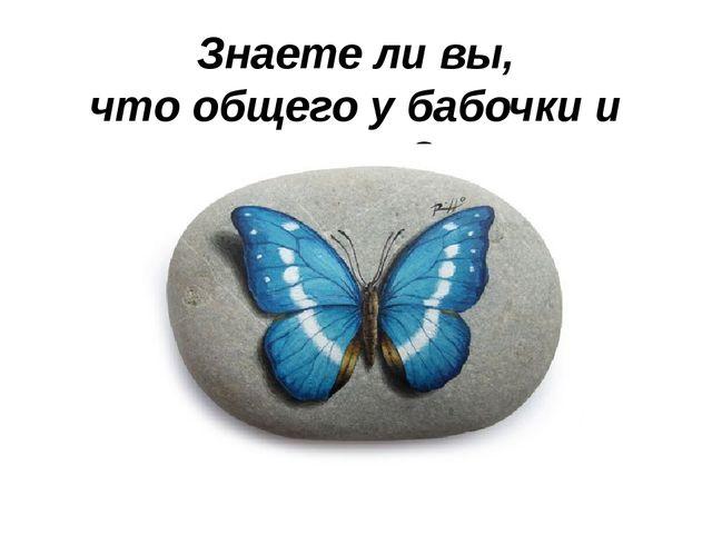 Знаете ли вы, что общего у бабочки и камня?