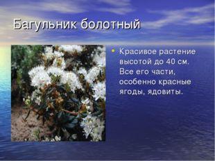 Багульник болотный Красивое растение высотой до 40 см. Все его части, особенн