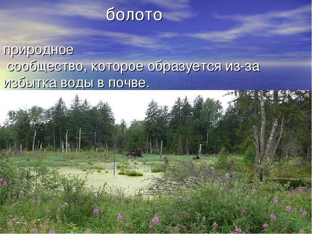 болото природное сообщество, которое образуется из-за избытка воды в почве.