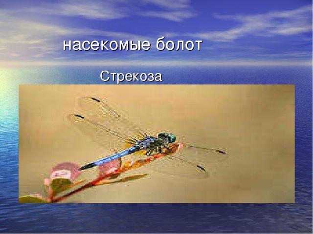 насекомые болот Стрекоза