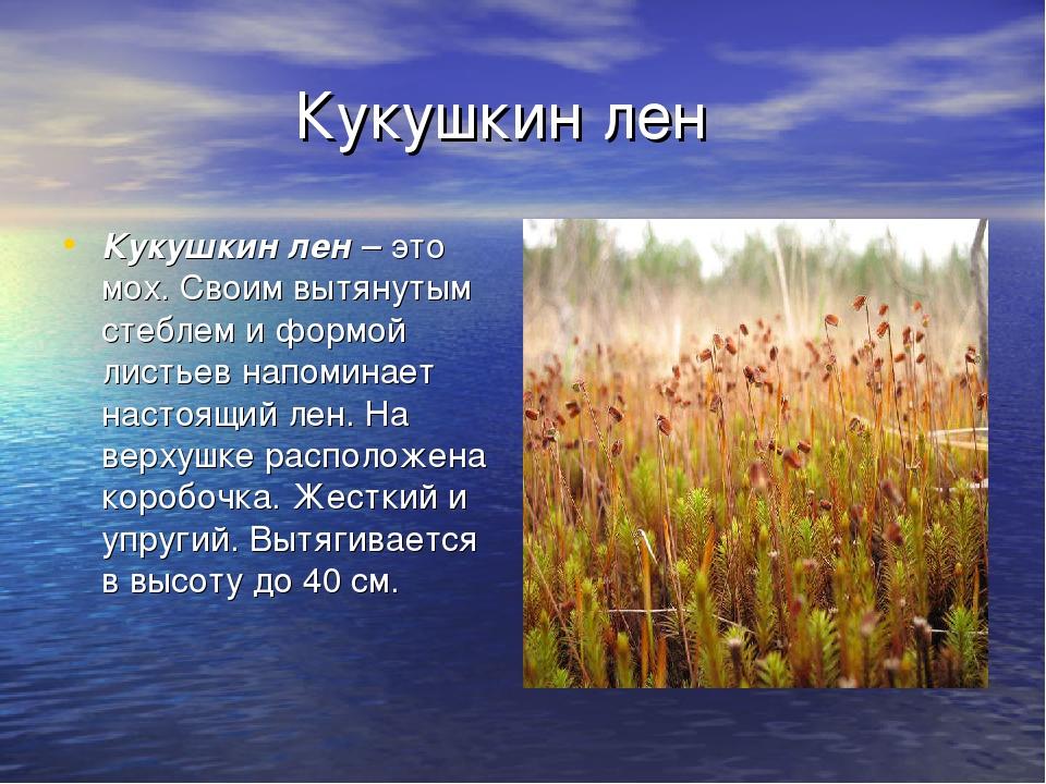 Кукушкин лен Кукушкин лен– это мох. Своим вытянутым стеблем и формой листье...