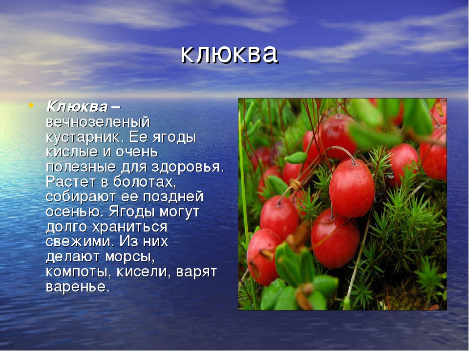 клюква Клюква– вечнозеленый кустарник. Ее ягоды кислые и очень полезные для...