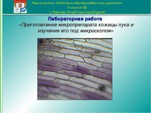 Лабораторная работа «Приготовление микропрепарата кожицы лука и изучение его