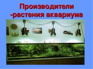 Производители -растения аквариума