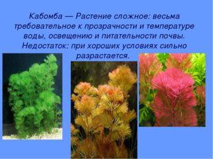 Кабомба — Растение сложное: весьма требовательное к прозрачности и температур
