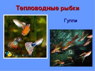 Тепловодные рыбки Гуппи
