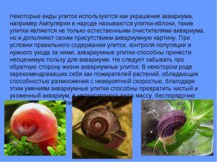 Некоторые виды улиток используются как украшение аквариума, например Ампуляри