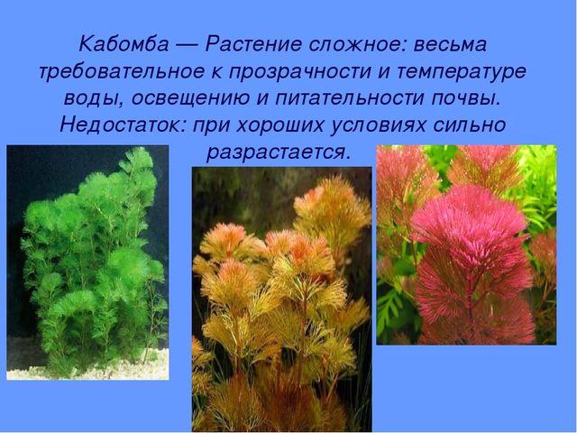 Кабомба — Растение сложное: весьма требовательное к прозрачности и температур...