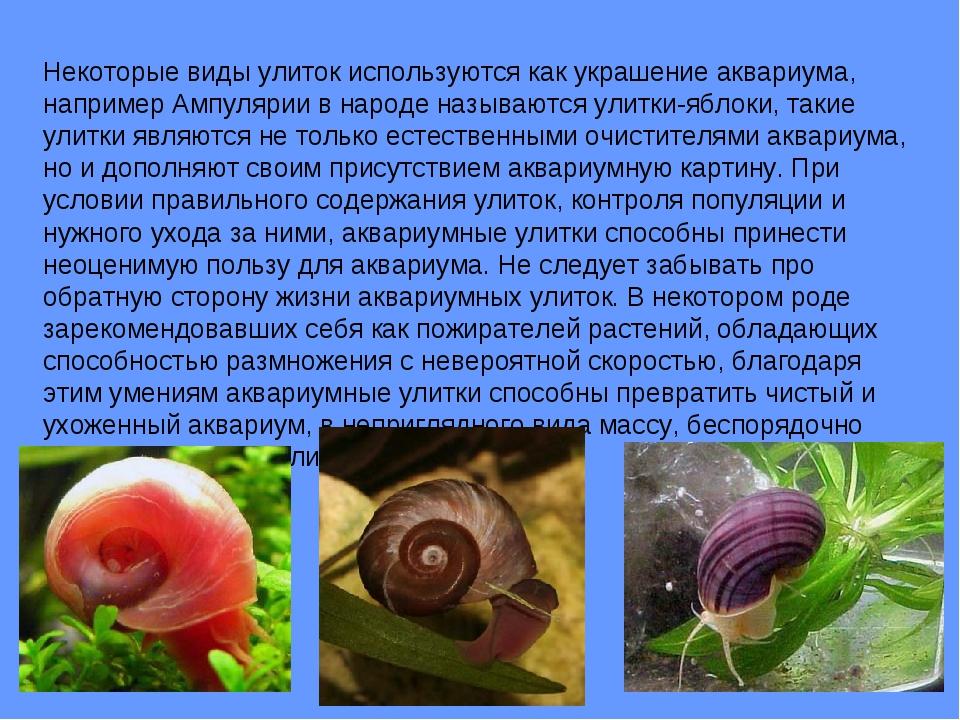 Некоторые виды улиток используются как украшение аквариума, например Ампуляри...