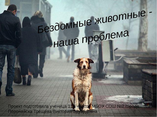 Бездомные животные - наша проблема Проект подготовила ученица 11А класса МБО...