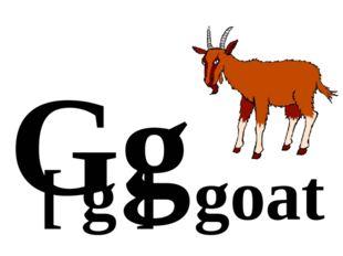 Gg [ g ] goat