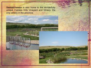 Saskatchewan is also home to the wonderfully unique Cypress Hills Vineyard an