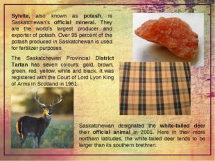 Sylvite, also known as potash, is Saskatchewan's official mineral. They are t