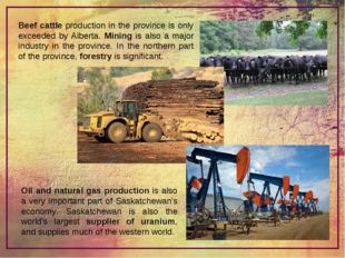 Beef cattle production in the province is only exceeded by Alberta. Mining is