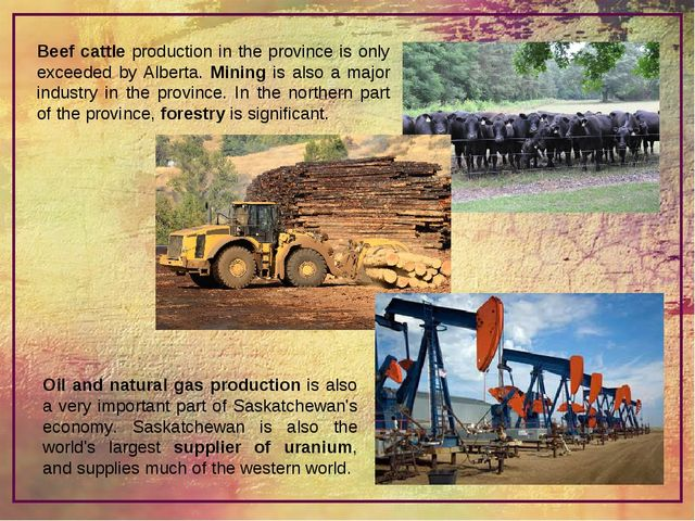 Beef cattle production in the province is only exceeded by Alberta. Mining is...