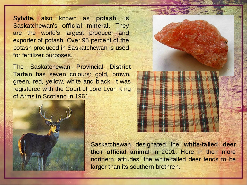 Sylvite, also known as potash, is Saskatchewan's official mineral. They are t...