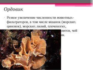 Ордовик Резкое увеличение численности животных-фильтраторов, в том числе мшан