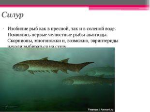 Силур Изобилие рыб как в пресной, так и в соленой воде. Появились первые челю