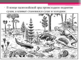 В конце палеозойской эры происходило поднятие суши, а климат становился суше