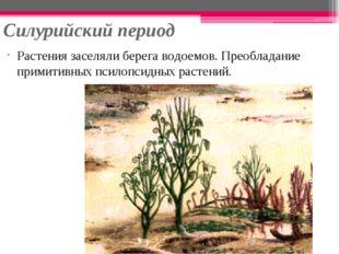 Силурийский период Растения заселяли берега водоемов. Преобладание примитивны