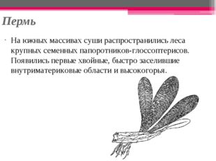 Пермь На южных массивах суши распространились леса крупных семенных папоротни