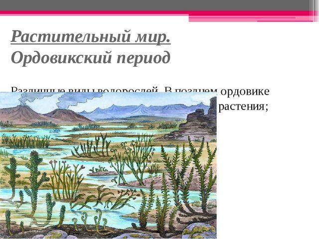 Растительный мир. Ордовикский период Различные виды водорослей. В позднем орд...