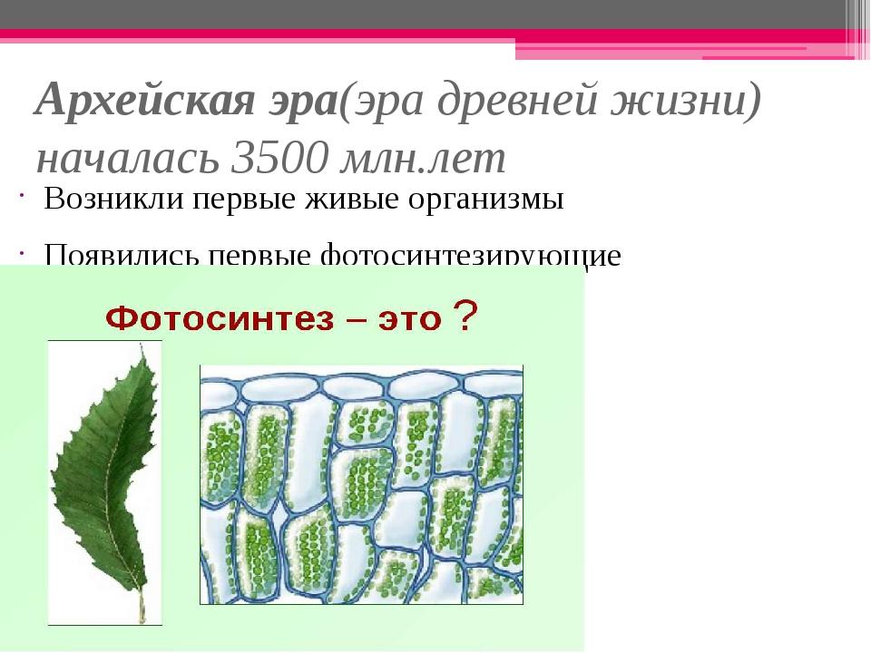Архейская эра(эра древней жизни) началась 3500 млн.лет Возникли первые живые...