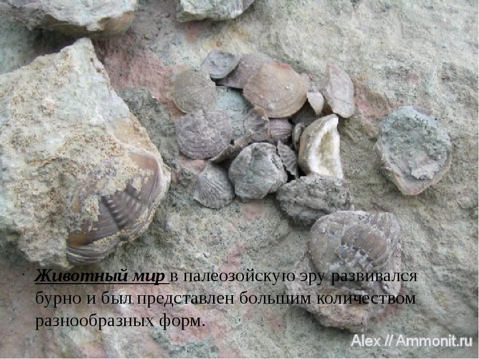 Животный мир в палеозойскую эру развивался бурно и был представлен большим ко...