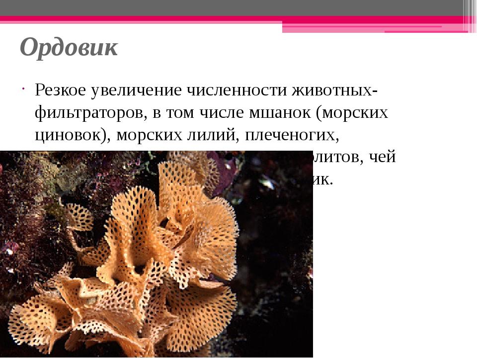 Ордовик Резкое увеличение численности животных-фильтраторов, в том числе мшан...