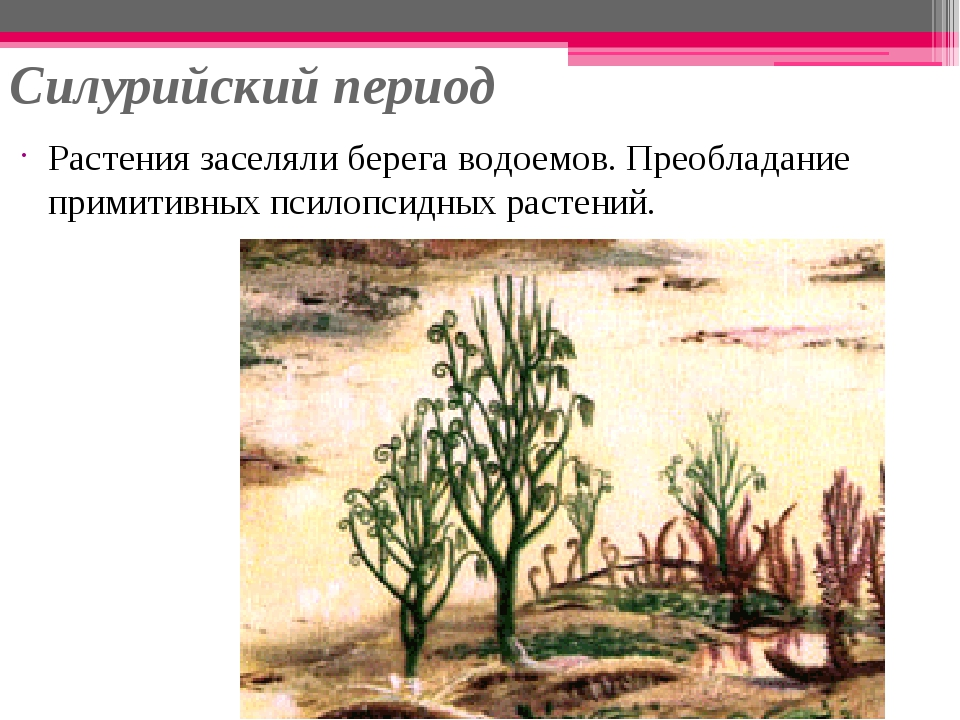 Силурийский период Растения заселяли берега водоемов. Преобладание примитивны...