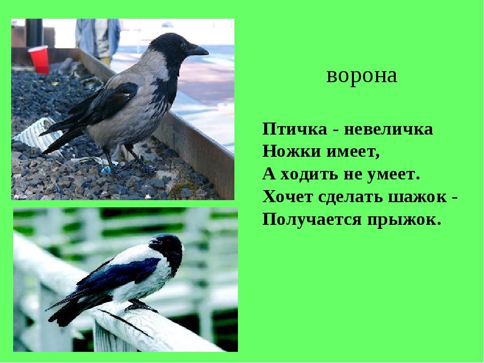 Птичка - невеличка Ножки имеет, А ходить не умеет. Хочет сделать шажок - Полу...